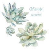 水彩多汁植物 水彩艺术 免版税库存图片