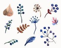 水彩套花叶子、分支和莓果 库存照片