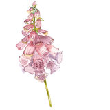 水彩好的桃红色花 向量例证