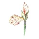 水彩好的花 向量例证