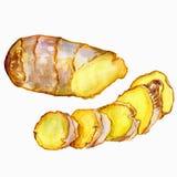 水彩姜根 手凹道姜例证 在白色背景隔绝的香料对象 厨房草本和 库存图片