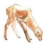水彩小鹿 向量例证