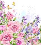 水彩庭院花 水彩玫瑰色例证 水彩花背景 免版税库存图片