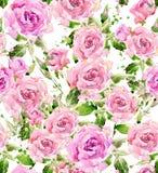 水彩庭院花 水彩玫瑰色例证 水彩花背景 免版税图库摄影