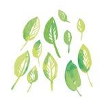 水彩开花设计的叶子成套工具 免版税库存照片