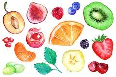 水彩异乎寻常的果子莓果切片集合 免版税图库摄影