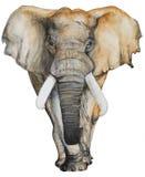 水彩手拉的大象 免版税库存图片