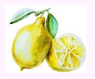 水彩手拉的柠檬 库存例证