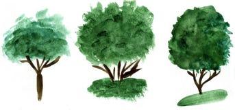 水彩手拉的树例证 自然设计元素 免版税库存照片