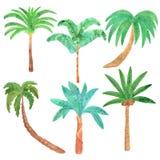 水彩手拉的棕榈集合 库存照片