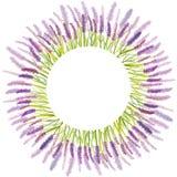 水彩手拉的淡紫色花 免版税库存照片