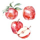 水彩手拉的红色苹果 在白色背景的被隔绝的eco自然食物果子例证 向量 库存图片