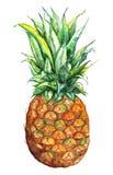 水彩手拉的菠萝异乎寻常的热带水果 图库摄影
