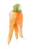 水彩新鲜的红萝卜 库存图片
