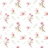 水彩无缝的墙纸用开花樱桃开花, branc 皇族释放例证