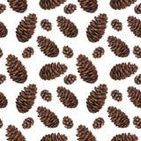 水彩无缝的样式杉木锥体 免版税库存图片