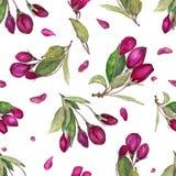 水彩无缝的花卉样式 手拉的开花花 免版税库存图片