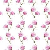 水彩木兰分支无缝的样式,在白色背景的手拉的例证 纺织品的季节设计 图库摄影