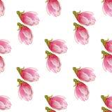 水彩木兰发芽无缝的样式,在白色背景的手拉的例证 纺织品的,印刷品季节设计 免版税库存照片