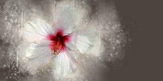 水彩木槿 库存图片
