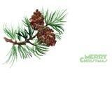 水彩杉木小树枝  快活的圣诞节 免版税库存图片