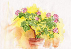 水彩柔和的花 库存图片