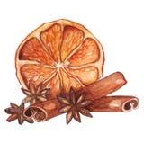 水彩柠檬柑橘茴香桂香 免版税库存照片