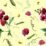 水彩样式用香豌豆花和绿豆 免版税库存照片
