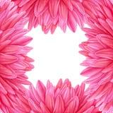 水彩桃红色大丽花 多汁植物的板材-离开仙人掌、仙人掌和柱仙人掌仙人掌 名片的模板,横幅,海报,飞行物,笔记本,化妆用品,香水 库存图片
