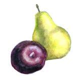 水彩梨和李子 库存图片