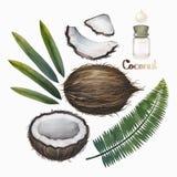 水彩椰子汇集 免版税图库摄影