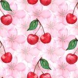 水彩樱桃莓果佐仓无缝的样式纹理背景传染媒介 免版税库存照片