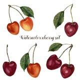 水彩樱桃集合 手画食物例证用在白色背景和叶子隔绝的莓果 玻色子 库存例证