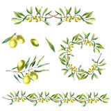 水彩橄榄树枝背景 免版税库存照片