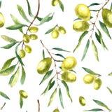水彩橄榄树枝背景 免版税图库摄影