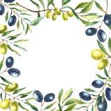 水彩橄榄树枝背景 库存照片