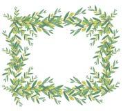 水彩橄榄色的花圈 在白色backgrou的被隔绝的例证 库存图片