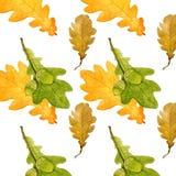 水彩橡木叶子和橡子 在白色背景的无缝的样式 秋天五颜六色的设计叶子花圈 免版税库存照片
