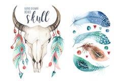 水彩漂泊母牛头骨和羽毛 西部哺乳动物 Boho行家鹿boho装饰印刷品鹿角 花 库存例证
