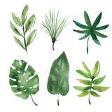 水彩热带叶子 库存例证