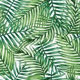 水彩热带棕榈叶无缝的样式 免版税库存图片
