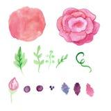 水彩玫瑰,飞溅元素集 葡萄酒 库存照片