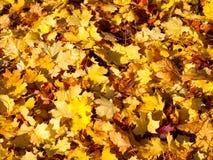 水彩秋天叶子 库存照片