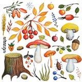 水彩秋天采蘑菇,莓果,分支,木头集合 免版税库存图片