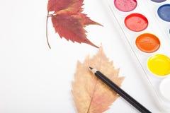 水彩箱子、铅笔和叶子在轻的背景 库存图片