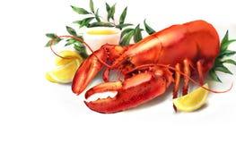 水彩红色龙虾和柠檬例证 库存照片
