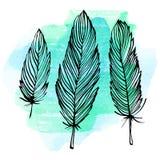 水彩羽毛集合 图库摄影