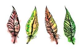水彩羽毛集合 向量例证