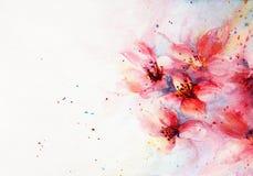 水彩背景桃红色开花 库存照片