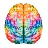 水彩脑子 库存例证